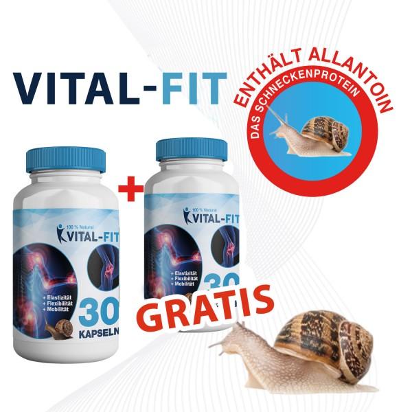Vital-Fit 1+1 GRATIS – Mit Allantoin-Schneckenprotein